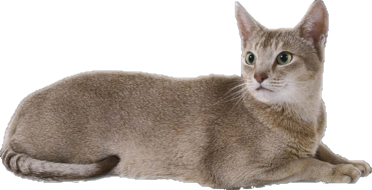 Cat Sitters Peterborough