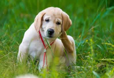 Puppy-Visiting-Peterborough