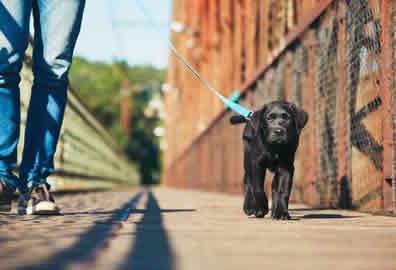 Puppy-Walking-Peterborough