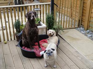 Dog Boarding Kennels In Peterborough Uk