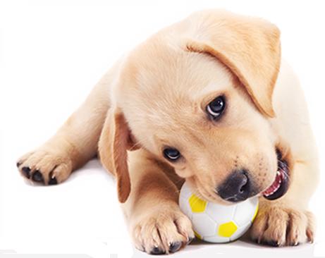 Doggy Daycare Peterborough